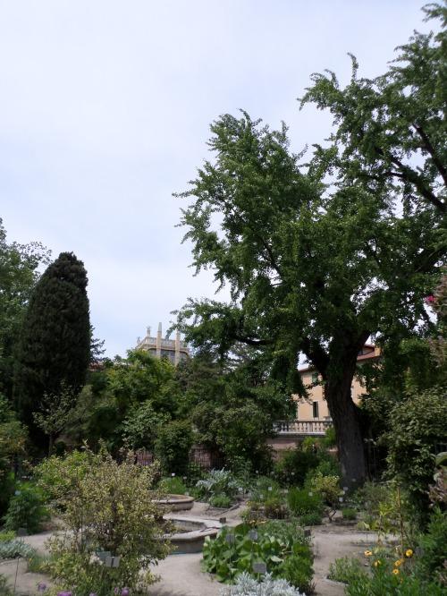 In the Orto Botanico